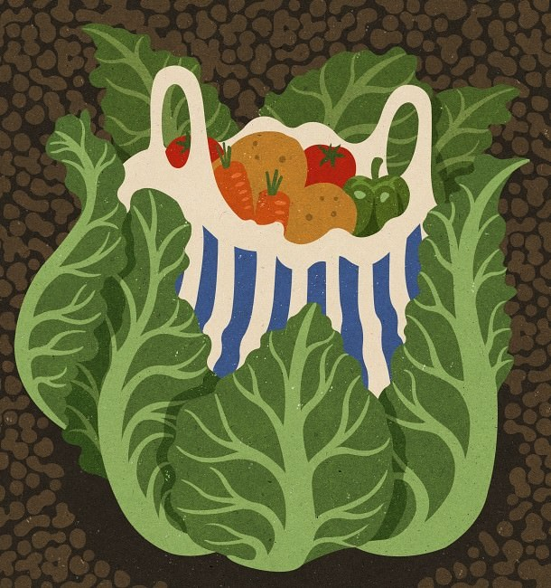 Jemals einen Gemüsegarten angebaut