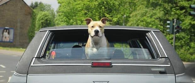 hund autofahrt