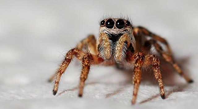 Spinnenphobie