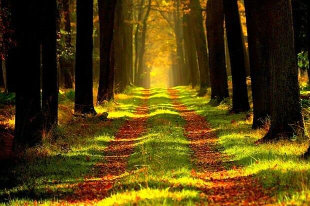 Sondeln-Sondelgänger-Wald