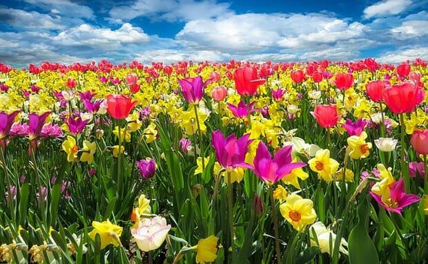 Muttertag-Blumen