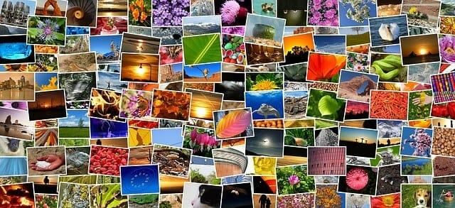 Pixabay Fotos Bilder Videos