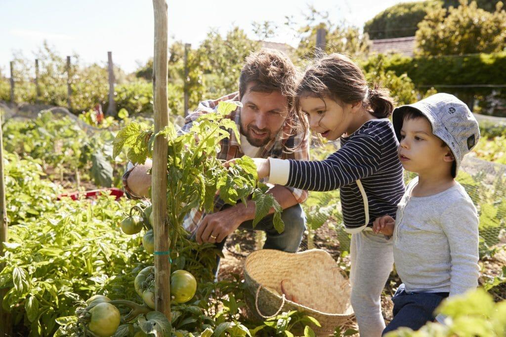 Erstes Gemüse kann angepflanzt werden