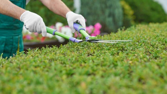 Gartenscheren und Baumscheren