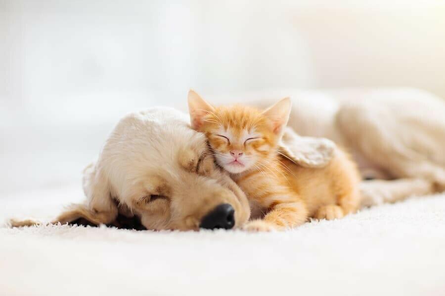 Smarte Helfer für Haustierbesitzer