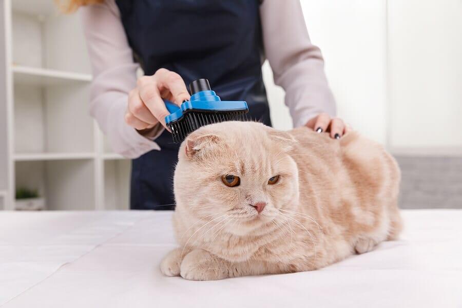 Katzenhaarentferner Bürste