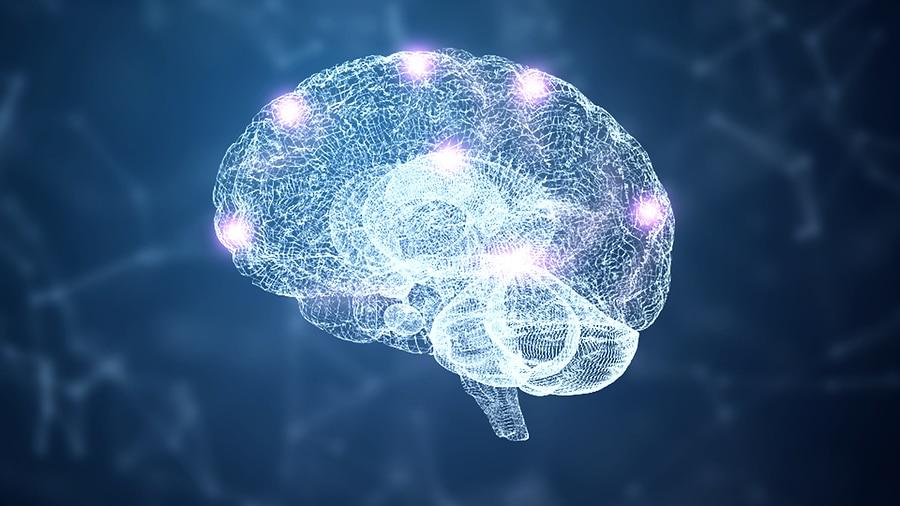 Gehirnregionen