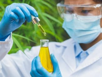 Cannabisöl Krebs